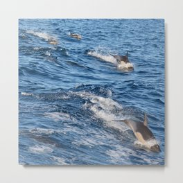 Dolphins Up and Down Metal Print