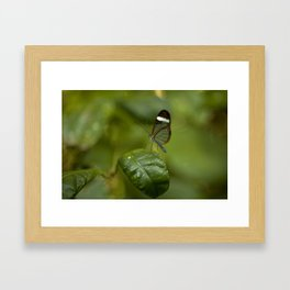 Transparent butterfly Framed Art Print