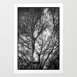 Tree Dreams Art Print
