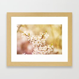Blooming Cerasus cherry tree Framed Art Print
