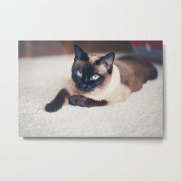 Siames Cat Metal Print
