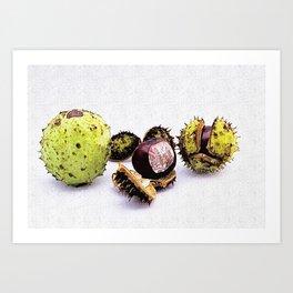 chestnut (Castanea) Art Print