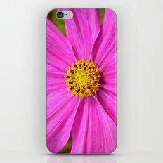 pink cosmos I iPhone & iPod Skin