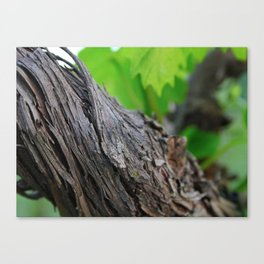 Young and old Canvas Print
