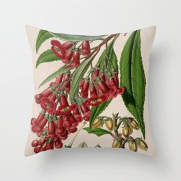 Flower buddleia colvilei1 Throw Pillow