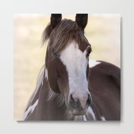 A horse is poetry in motion Metal Print