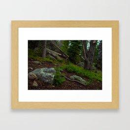 Tree School Framed Art Print