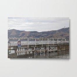 Slow Terns of Akaroa Metal Print