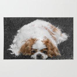 Cavalier King Charles Spaniel Dog Rug