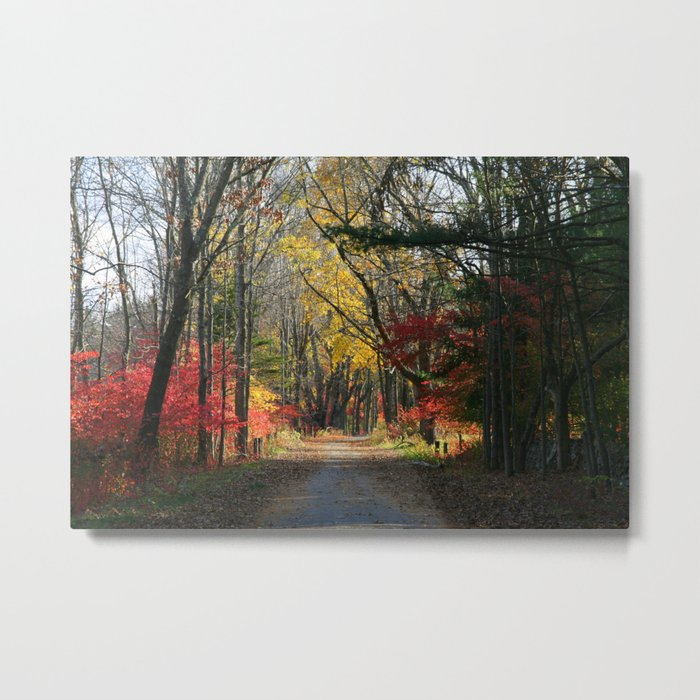 Autumn Paths Metal Print
