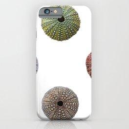 Sea Urchins Scheleton Dead Empty Shells Perforated Echinoidea iPhone Case