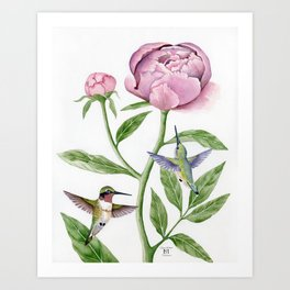 Ruby-Throated Hummingbirds & Peony Art Print