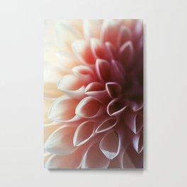 Pink Dahlia #1 Metal Print