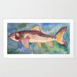 Mountain Whitefish (oddly not so white) Art Print
