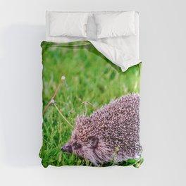 Dandelion Run Comforters