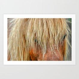 Shaggy Pony Art Print