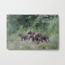 Four Brown Bear Cubs Metal Print