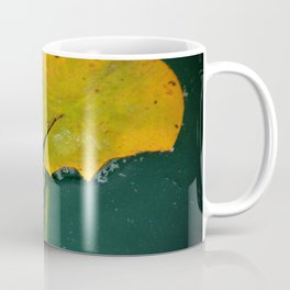 Baby Turtle And Lily Pad Coffee Mug