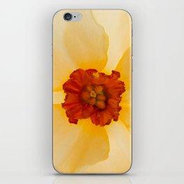 Golden Daffodil iPhone Skin