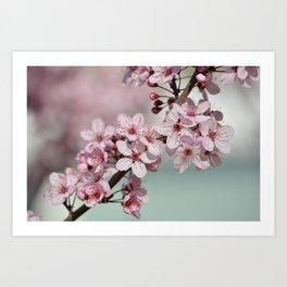 Pretty Pink Cherry Blossom Flowers Art Print