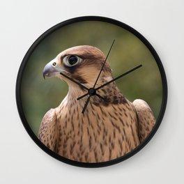 Falco peregrinus pelegrinoides  Wall Clock