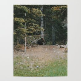 Mother Grizzly Watch Poster