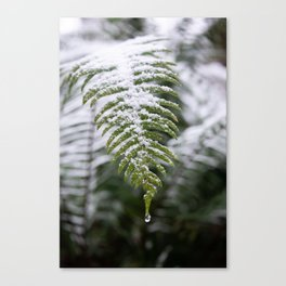 Fern Forest Winter Pacific Northwest Snow II - Nature Photography Canvas Print
