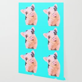 Baby Pig Turquoise Background Wallpaper
