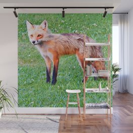 Red Fox in a Yard Wall Mural