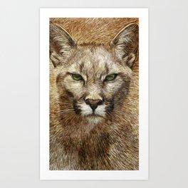 Animaline - Cougar Art Print