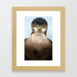 Cormorant Framed Art Print