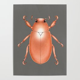 Copper Beetle Poster