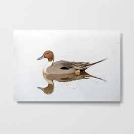 Reflections of a Northern Pintail Duck Metal Print