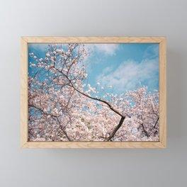 Cherry Blossoms in a Blue Sky - Film Photograph Framed Mini Art Print