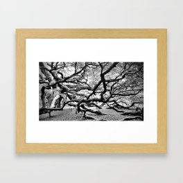 Grasp of the Ancient Oak Framed Art Print