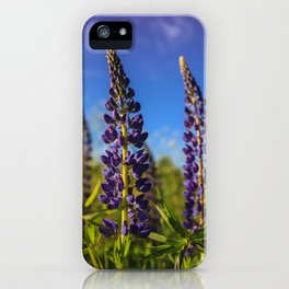 Purple lupines in a Sunny day iPhone Case