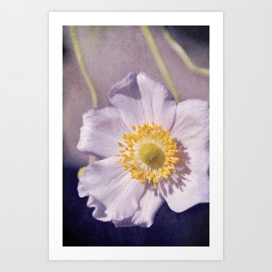 Anemone love III Art Print