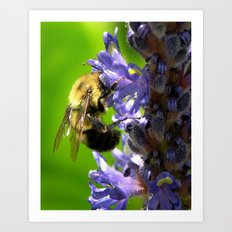 Bee all you can Bee Art Print