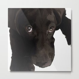 Chocolate Labrador Puppy Metal Print