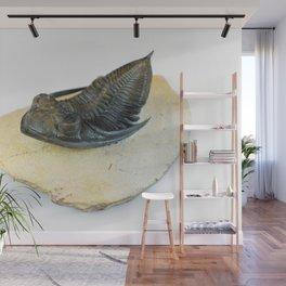 Zlichovaspis Trilobite Fossil Wall Mural