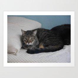 Alert Tabby Cat Art Print