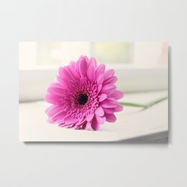 Gerbera on the Windowsill Metal Print