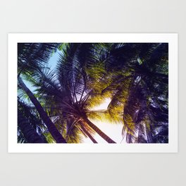 Sunset in Palm Trees Art Print
