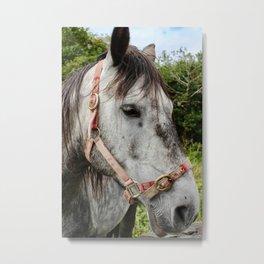 Horse With No Name Metal Print