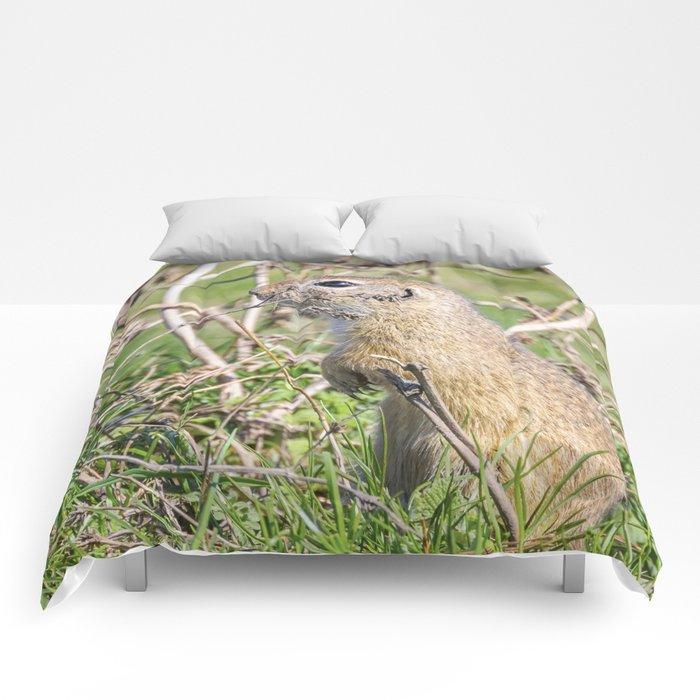 Souslik (Spermophilus citellus) European ground squirrel in the natural environment Comforters