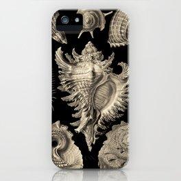 Ernst Haeckel Prosobranchia Sea Shells iPhone Case