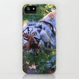 The sleeping tiger by Giada Ciotola iPhone Case