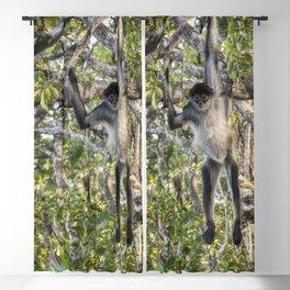 Spider Monkey Acrobatics in Belize Jungle Blackout Curtain