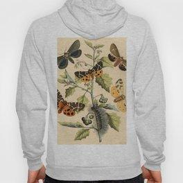 5 Moths Hoody