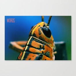 The Eastern Lubber Grasshopper Canvas Print